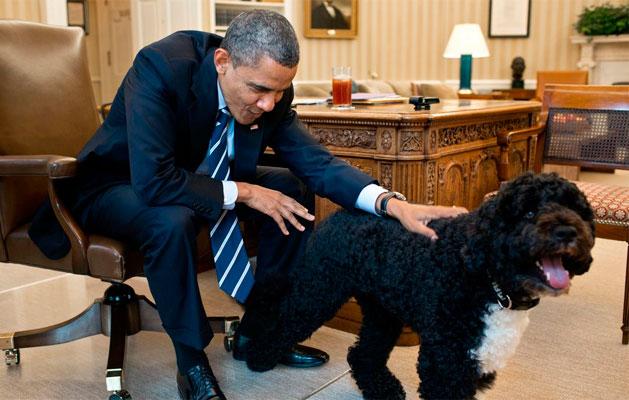 Obama e Bo.revista meu pet.com.br