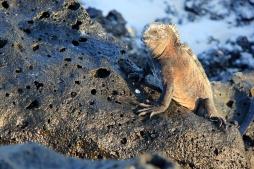 Galápagos, Equador