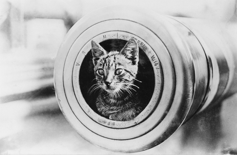 medalhasdeguerra.blogspot.com.br.mascote do cruzador HMAS Encounter, dentro do cano de uma arma de 6 polegadas. Australian War Memorial.